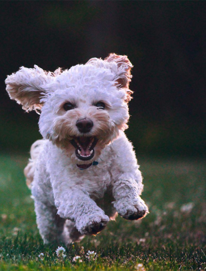Boomer hondenuitlaatservice staand