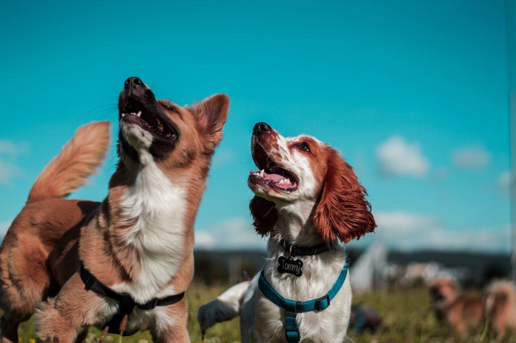 headerbeeld hondenuitlaaservice